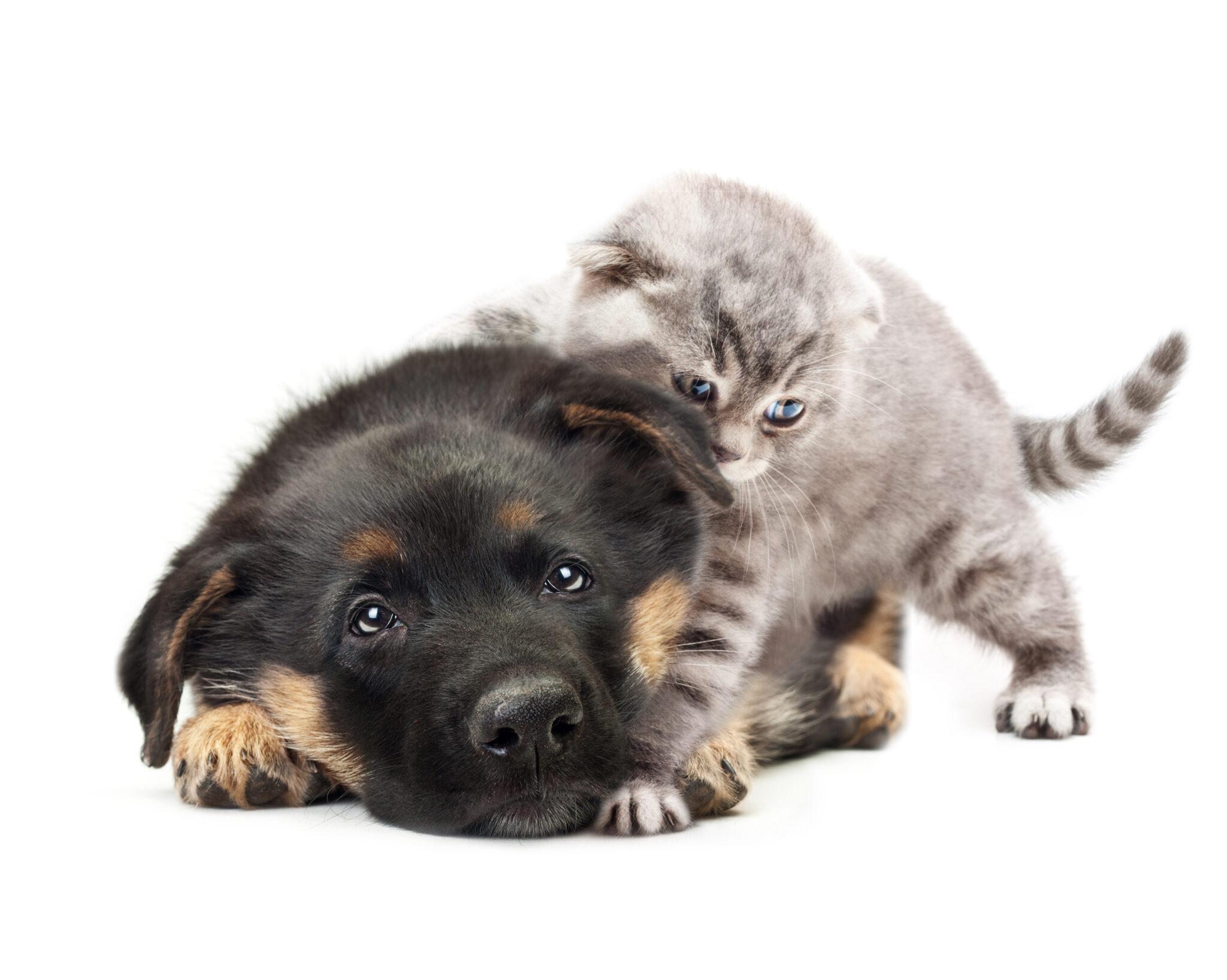 שמות חתולים
