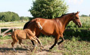 רכיבת סוסים בצפון