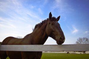 לימוד רכיבת סוסים