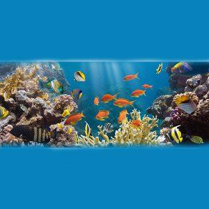 גידול דגי מים מתוקים