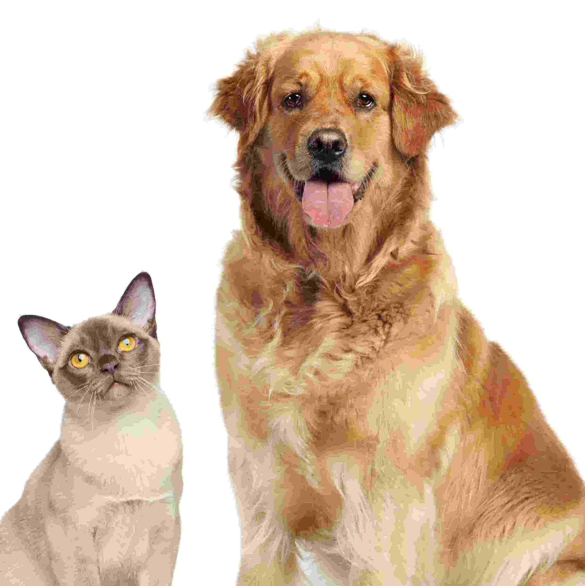 חוק הכלבת החדש