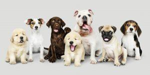 הנחיות ליבוא כלבים