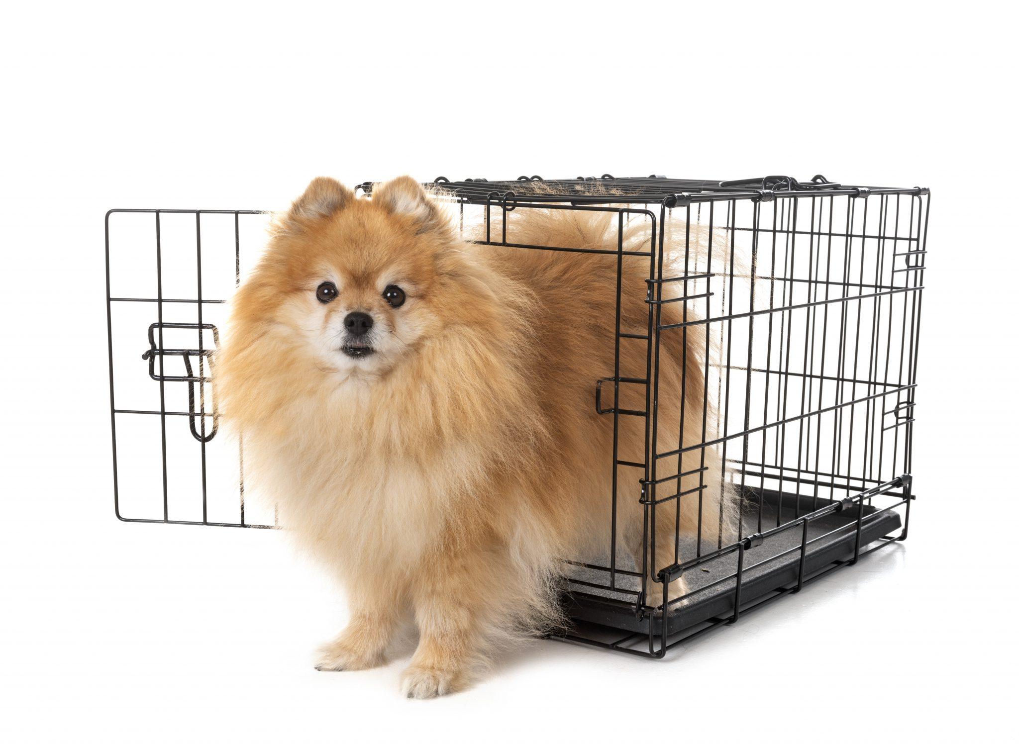 עיקור כלבות