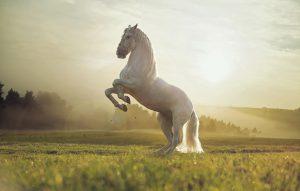 סרטוני סוסים
