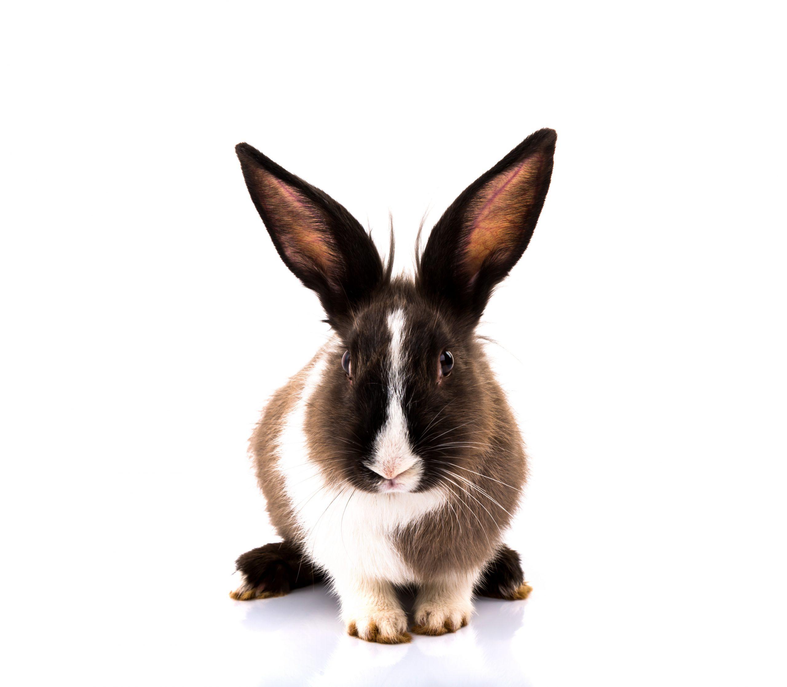 משחק לארנב