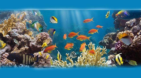 דגי מים מתוקים