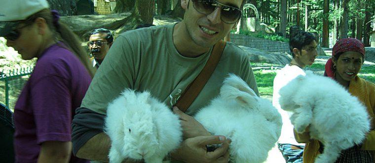 ארנב אנגורה