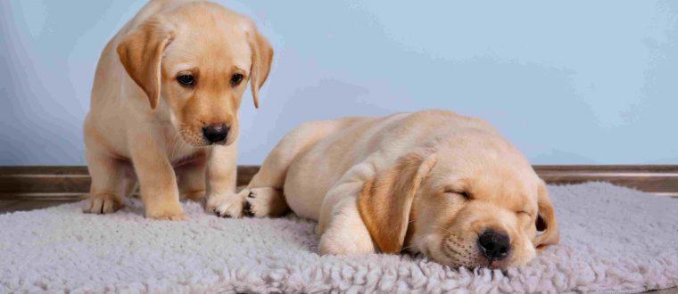 מזון לכלבים בזמן מחלה
