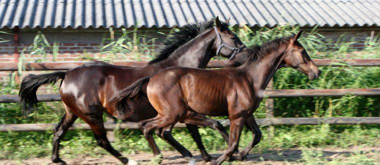 חוות סוסים בדרום