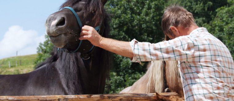 רכיבת סוסים לילדים