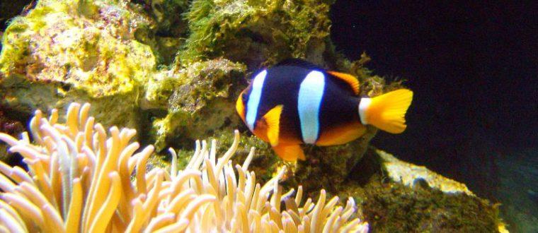 דגי מים מלוחים