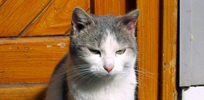 דלתות חתולים