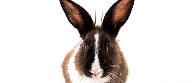 משחקים לארנבים