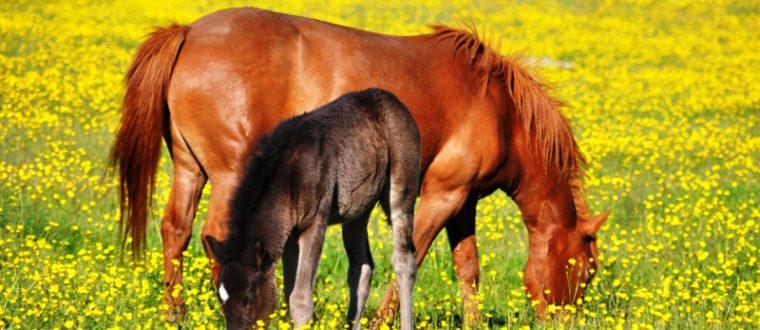 חוג סוסים