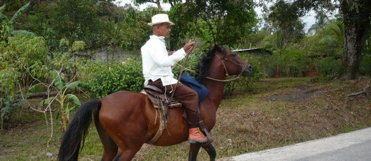 חוות סוסים במרכז