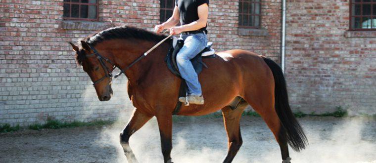 רכיבת סוסים טיפולית – למי מומלצת?