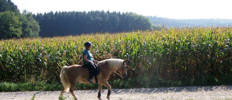 רכיבה על סוסים