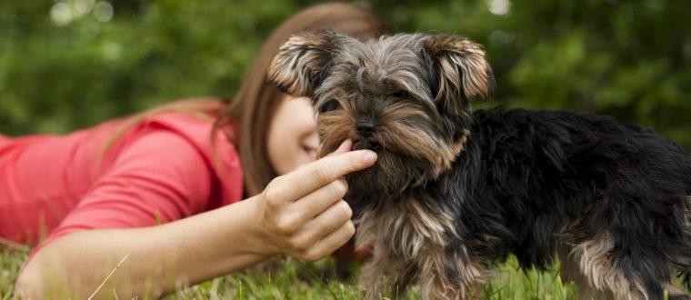 למה כלבים אוכלים דשא?